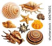 shell   Shutterstock . vector #60676831