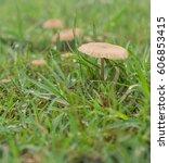 Tiny Living Mushrooms And...