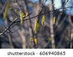 young tree branch with... | Shutterstock . vector #606940865