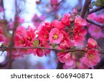 a blooming garden tree with... | Shutterstock . vector #606940871
