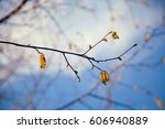 young tree branch with... | Shutterstock . vector #606940889