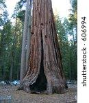 giant sequoia in mariposa grove ... | Shutterstock . vector #606994