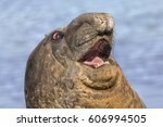 southern elephant seal | Shutterstock . vector #606994505