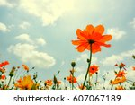 colorful cosmos flowers on sky... | Shutterstock . vector #607067189