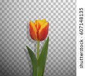 realistic vector tulip isolated.... | Shutterstock .eps vector #607148135