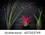 Tillandsia Plants On Dark...