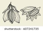set cocoa beans illustration.... | Shutterstock .eps vector #607241735