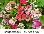 spring flowers   Shutterstock . vector #607255739