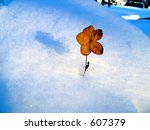 winter flower alone and frozen | Shutterstock . vector #607379