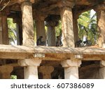 gray langur monkey langurs... | Shutterstock . vector #607386089