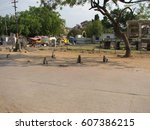 gray langur monkey langurs... | Shutterstock . vector #607386215