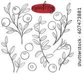 cranberry. vector hand drawn...   Shutterstock .eps vector #607473881