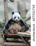 Small photo of Chiang Mai, Thailand - July 23, 2011: close up of Giant Panda, Ailuropoda melanoleuca, eating bamboo in Chiang Mai Zoo, the first and only zoo in Northern Thailand.