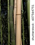 Curved Bamboo Cane