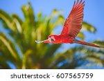 macaw in free flight in exotic... | Shutterstock . vector #607565759
