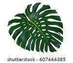 Monstera Dark Green Tropical...