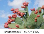 prickly pear | Shutterstock . vector #607741427