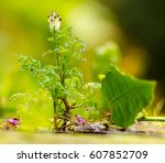 green plant with water drops  | Shutterstock . vector #607852709