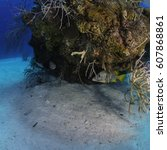 Small photo of A schoolmaster fish hiding under a coral head