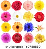Stock photo set of flowers isolated on white background close up studio photography 60788890