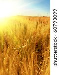 Wheat Field With Sun Ray