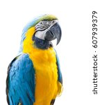 blue and yellow macaw or blue... | Shutterstock . vector #607939379