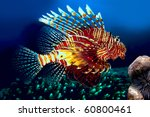 Lionfish  Siam Bay. Province...