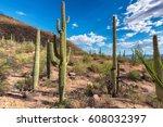 Cactus Fields In Sonoran Desert ...