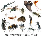 wild animal insect set collection isolated on white - stock photo