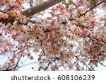 Stock photo flower 608106239
