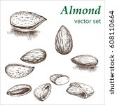 almond  plant set. the... | Shutterstock .eps vector #608110664