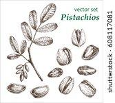 pistachio  plant set. the... | Shutterstock .eps vector #608117081