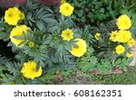 marigold | Shutterstock . vector #608162351