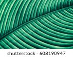 striped of tropical leaf ... | Shutterstock . vector #608190947