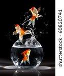 Stock photo goldfishs jumps upwards from an aquarium on a dark background 60820741