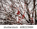 isolated branch with red... | Shutterstock . vector #608215484