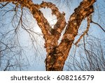 isolated tree with shedding...   Shutterstock . vector #608216579