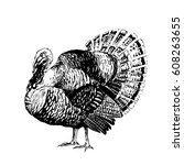 engraving black and white... | Shutterstock .eps vector #608263655