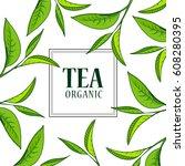 organic tea frame logo. green... | Shutterstock .eps vector #608280395
