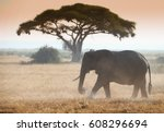 Elephant On African Savannah I...