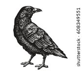 hand drawn black crow. raven ... | Shutterstock .eps vector #608349551
