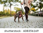 Stock photo low view of an anonymous woman walking a dog at a park 608356169