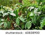 coffee plantation | Shutterstock . vector #60838900