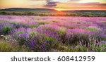 meadow of lavender. nature... | Shutterstock . vector #608412959