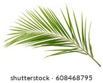 green palm branch isolated on... | Shutterstock . vector #608468795