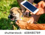 identification of a lost animal ... | Shutterstock . vector #608480789
