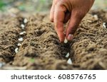 Hand Planting Pumpkin Seed Marrow - Fine Art prints