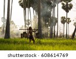 Coconut Plantation Farmer.