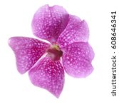 Small photo of Purple vanda orchid isolated on a white background