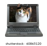 Stock photo small laptop with cat out of screen 60865120